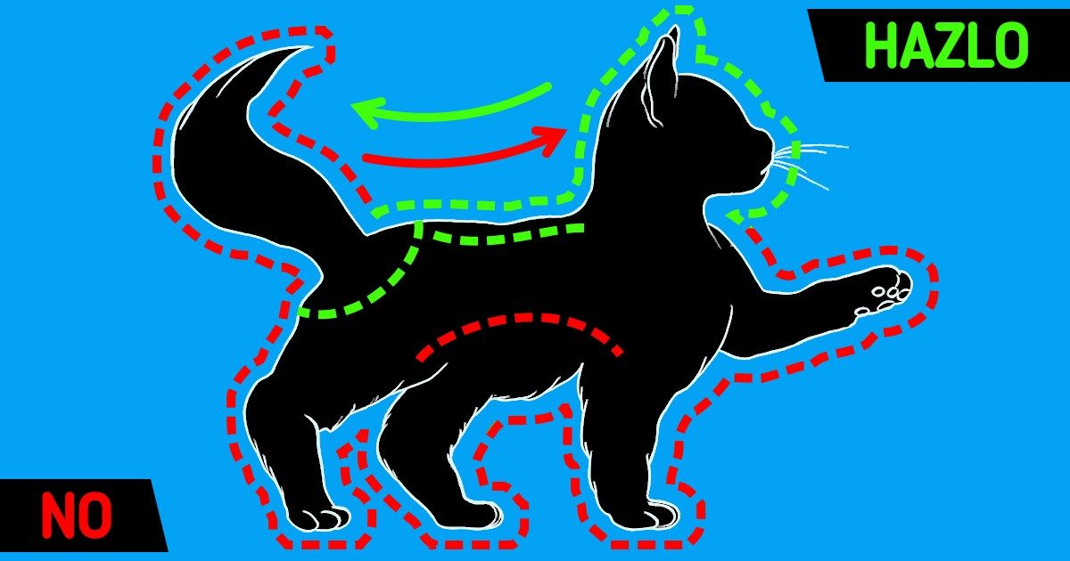 Cómo acariciar a tu gato en los lugares adecuados