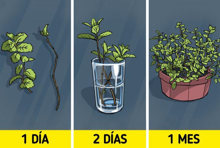 Cómo cultivar frutas y verduras en casa